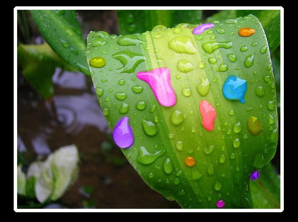 lluviadeam